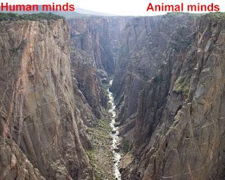 human minds