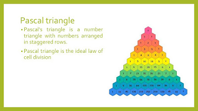 Java Program to print pascal triangle