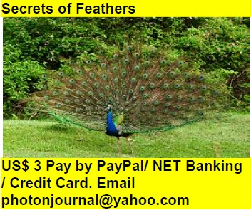 Secrets of Feathers wings suspense hide birds nest