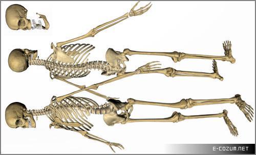 300 kemikle doğan insanoğlunun yetişkinliğinde bu sayı 206'ya düşüyor.