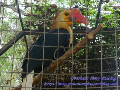 Crocolandia's Birds
