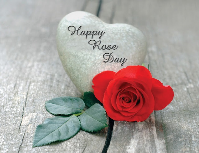 Rose Day HD Wallpapers 2018