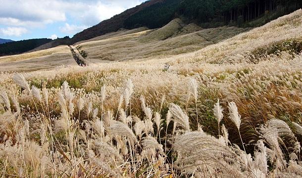 Паипасная трава