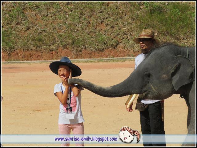 All about Elephants @ Kenyir Elephant Village, Terengganu