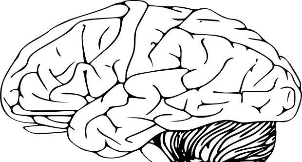 alzheimer, artikel kesehatan, daya ingat, herbal, ingatan jangka pendek, kesehatan, memori, meningkatkan daya ingat, sehat,