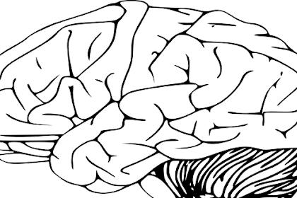 Cara mengembalikan ingatan yang hilang