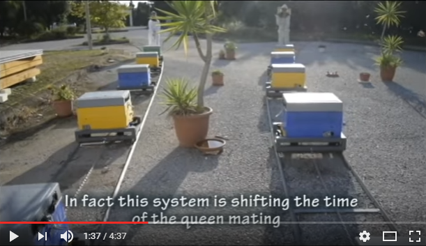 Το τρένο των παρθένων βασιλισσών video