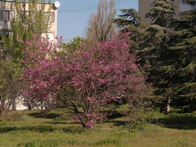 Севастополь весна 2017