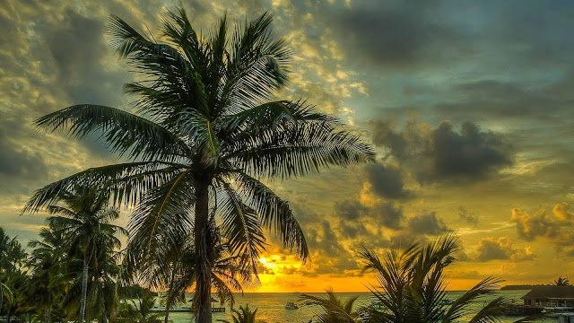 Download 1920x1080 Maldives, Palms, Trees, Shadow, Sea, Ocean, Beach, Hdr Wallpaper, Background Full HD 1080p
