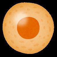 細胞のイラスト(オレンジ)