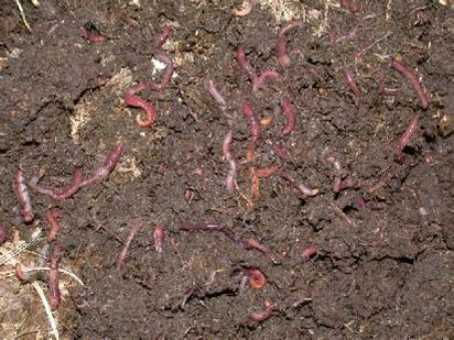 lombricultura alternativa agroecologica como abono organico
