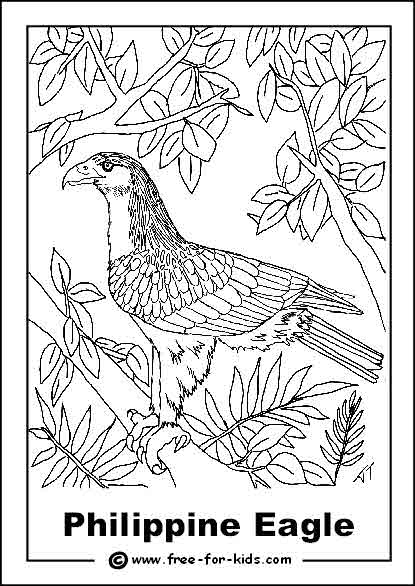 phillipine eagle coloring pages - photo#5