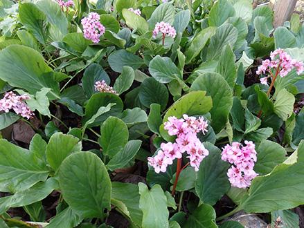 Arbustos que florecen en invierno for Plantas de jardin resistentes al frio