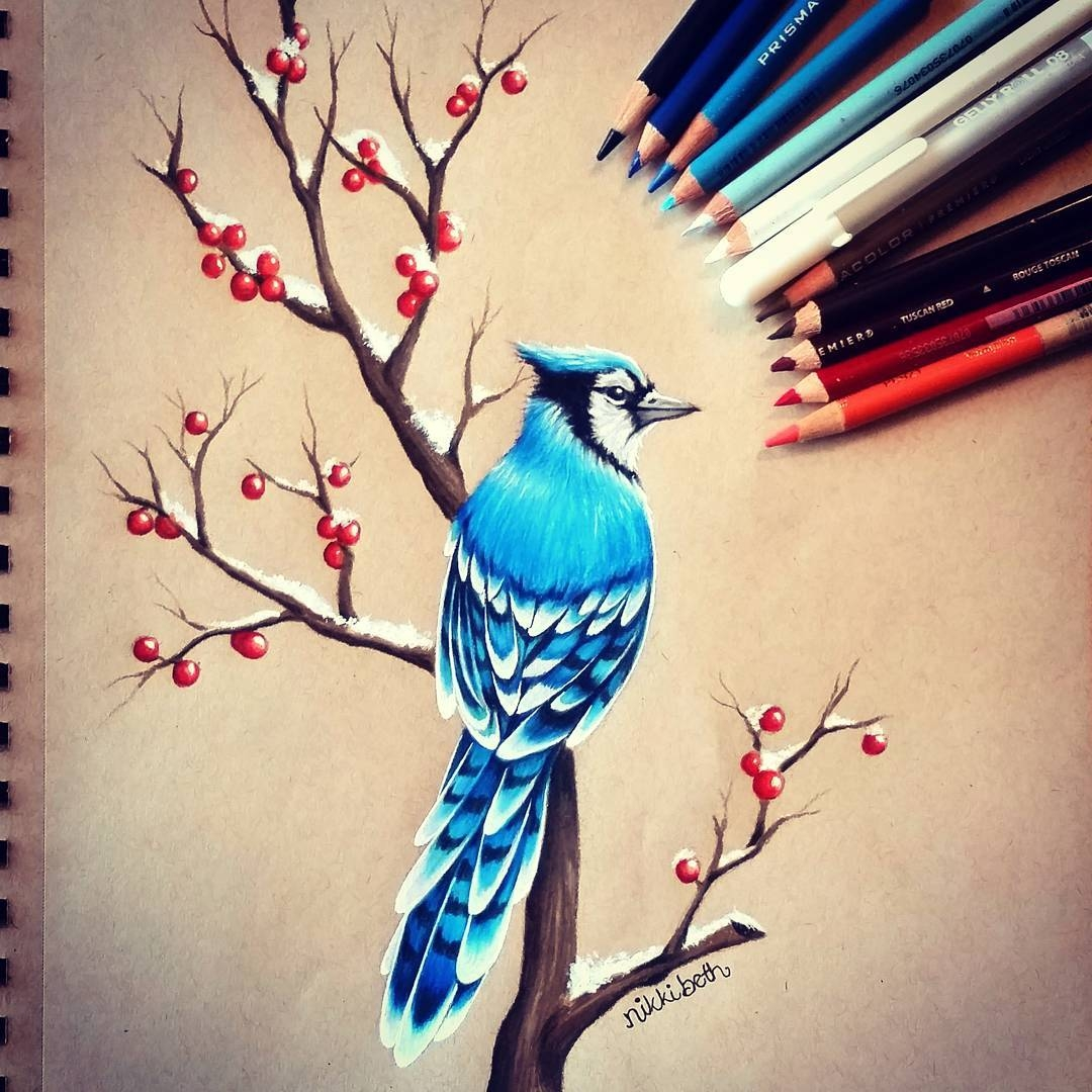 13-Blue-Jay-Nikki-Beth-Animal-Portrait-Drawings-in-different-Styles-www-designstack-co