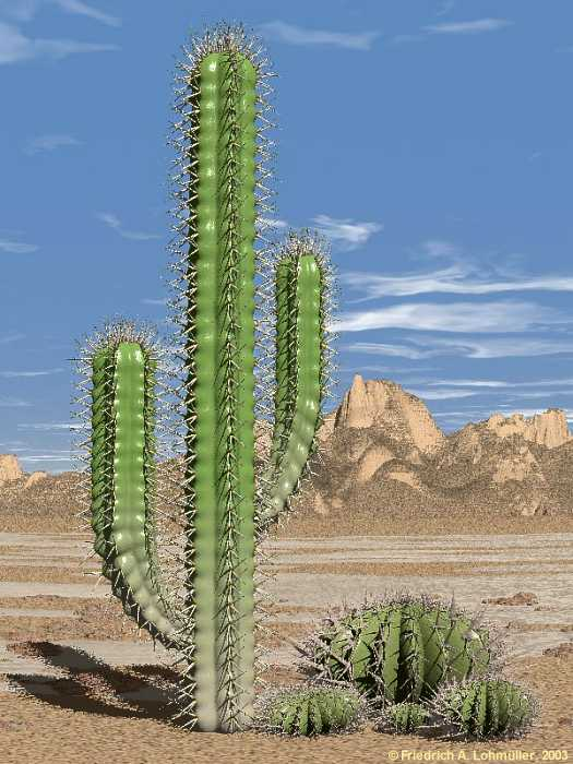 Science Tablets: How can desert plants live without water?