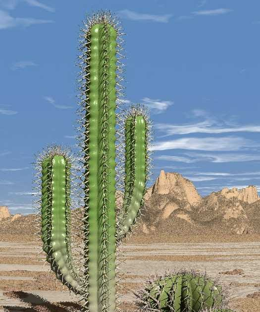 Pictures Of Catus: Science Tablets: How Can Desert Plants Live Without Water?