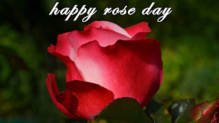 Happy Rose Day 2017 HD Images