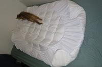 Rückseite: MESANA Premium Matratzen-Schoner | Größe: 140x200 cm, Höhe: 27cm | weiß aus Soft Touch Microfaser | 100% Polyester | Matratzen-Auflage auch für Ihr Boxspring-Bett und Wasserbett | Unter-Bett