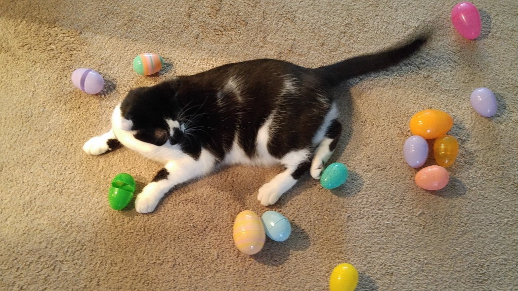 Easter Egg Hunt, Kitty style. #CatholicCentral #EasterTraditions #ad