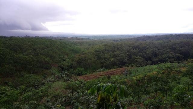 Wisata Gunung Pasang Di Jember Jawa Timur