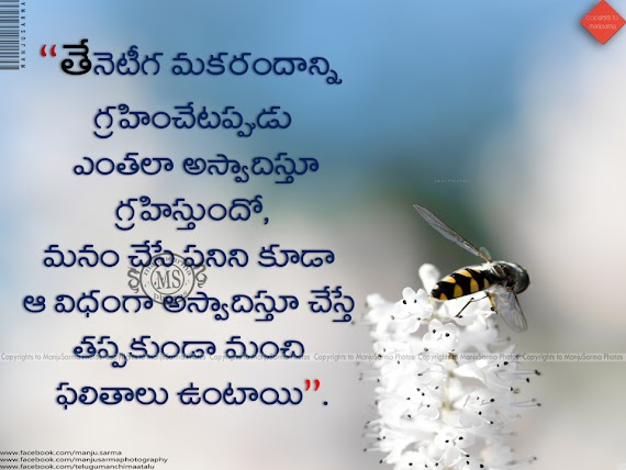 75+ Life Quotes In Telugu With Images