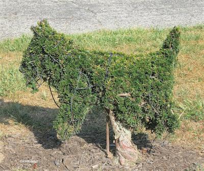 topiary dog