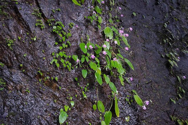 Flora on the wet rocks