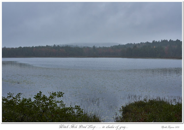 Witch Hole Pond Loop: ... in shades of gray...