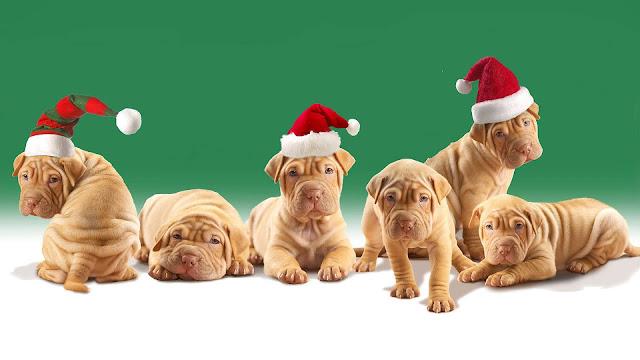 Jonge hondjes met kerstmuts