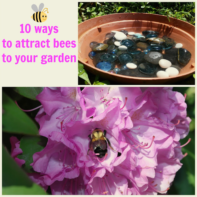 10 Ways to attract bees to your garden