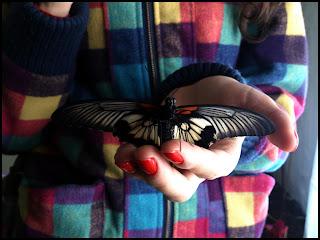 Motyl - Muzeum Motyli w Krakowie