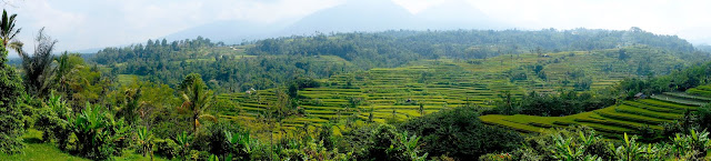 Rizières de Jati Luwih à Bali en Indonésie