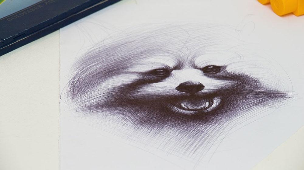 05-Raccoon-Yelena-Yefimova-Animals-Drawn-with-Ballpoint-Pens-www-designstack-co