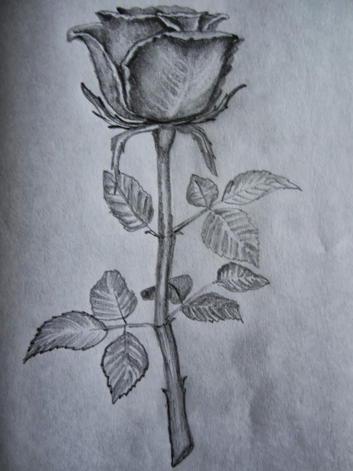 hoontoidly: Rose Drawings In Pencil Outline Images