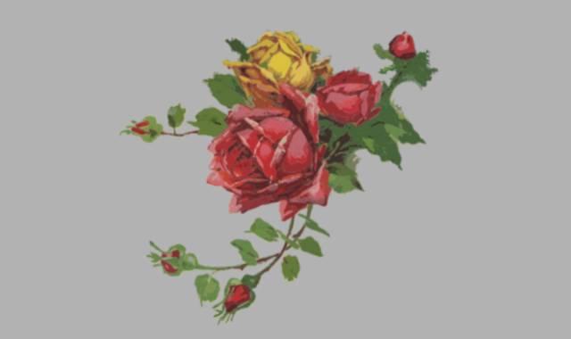 rote und gelbe Rosen -Gedichte