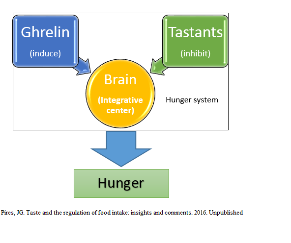relationship between leptin and ghrelin lack