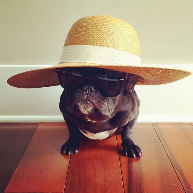 french bulldog hat cute funny animalz funny french bulldog 2013 latest 8738