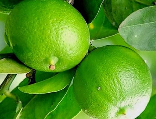 5 Manfaat Sehat Menakjubkan Dibalik Asamnya Jeruk Nipis