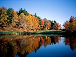 Danau dan pepohonan