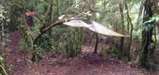 Info Lengkap Pendakian Gunung Cikuray via Kiara Jenggot