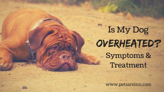 dog overheated