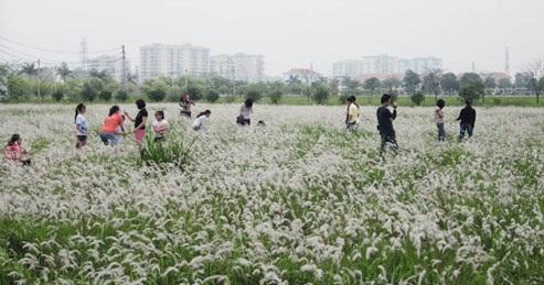 Khám phá đồi cỏ tranh Đà Lạt, dành cho những ai đam mê nghệ thuật và khám phá thiên nhiên