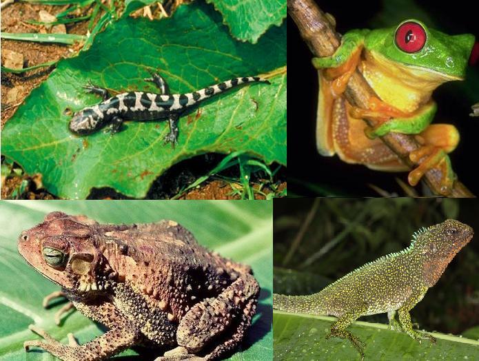Classificação e Ecologia dos Anfíbios