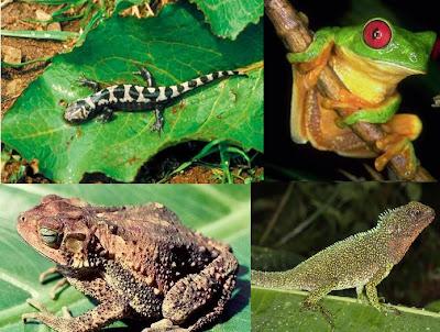 Anfíbios, Ecologia e Classificação dos Anfíbios