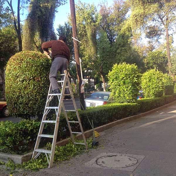 Casualidad o no el hombre está cortando los árboles frente a unos locales que venden de productos franceses y europeos. La moda D'Europe ya llegó a la colonia.