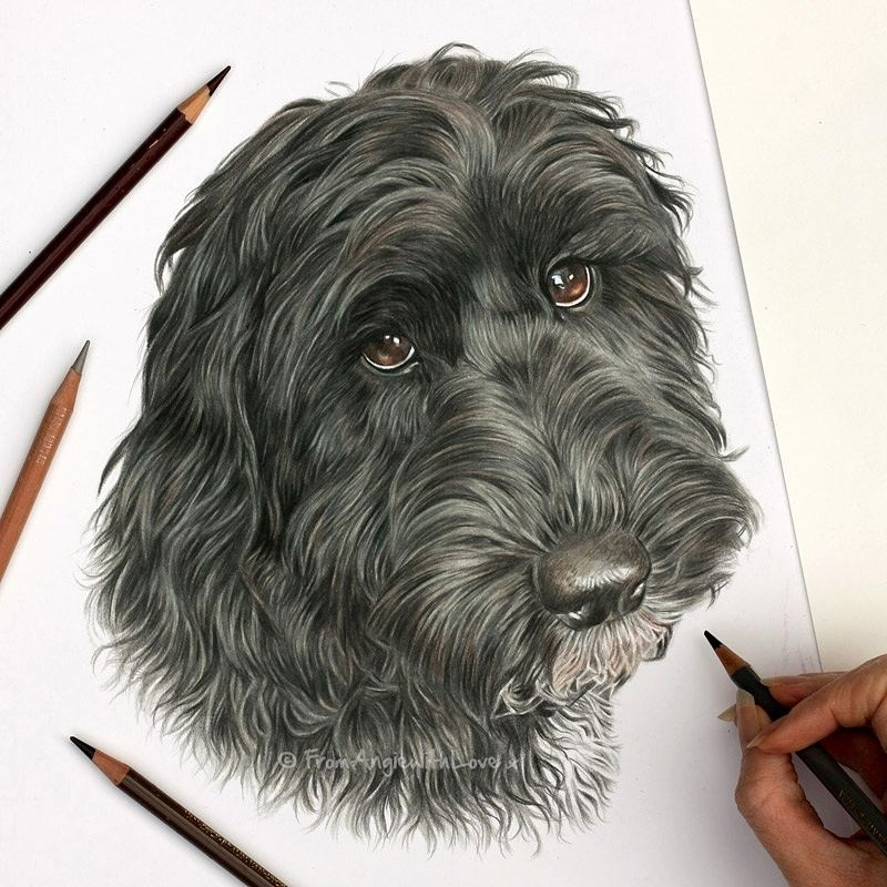 12-Ted-the-Cockapoo-Angie-A-Pet-and-Wildlife-Pencil-Drawing-Artist-www-designstack-co