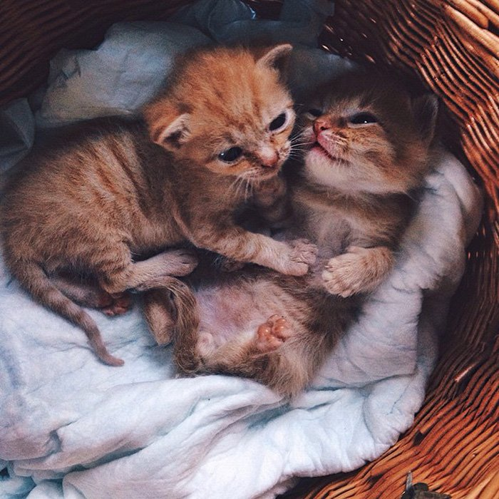 Two Ginger Brothers Found In Garden Are Inseparable From Day 1