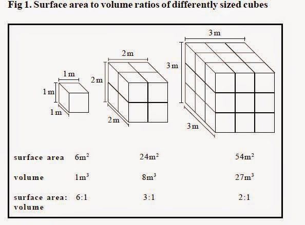 # 26 Surface area to volume ratios, Investigating