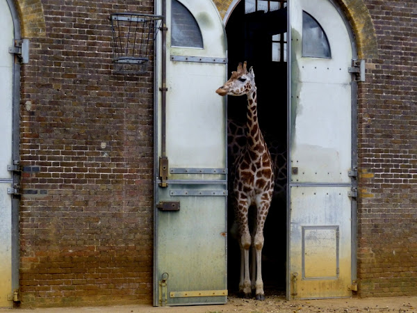 A trip to London Zoo
