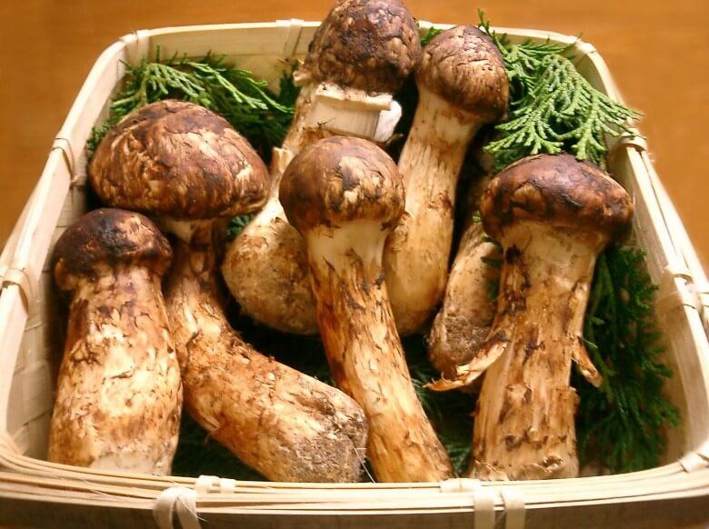 En nadir bulunan yiyecekler: mantar